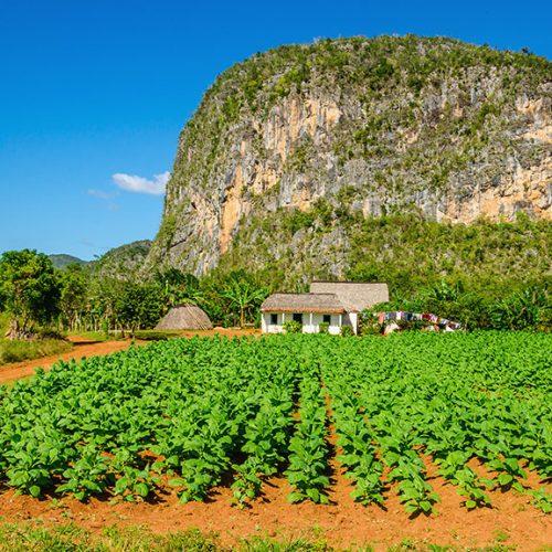 Vista tipica della Valle de Vinales con fattoria e mogotes a Cuba