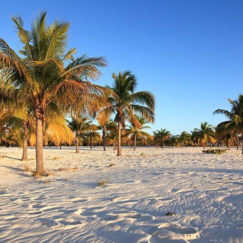 Cayo Largo spiaggia con palme soleggiate