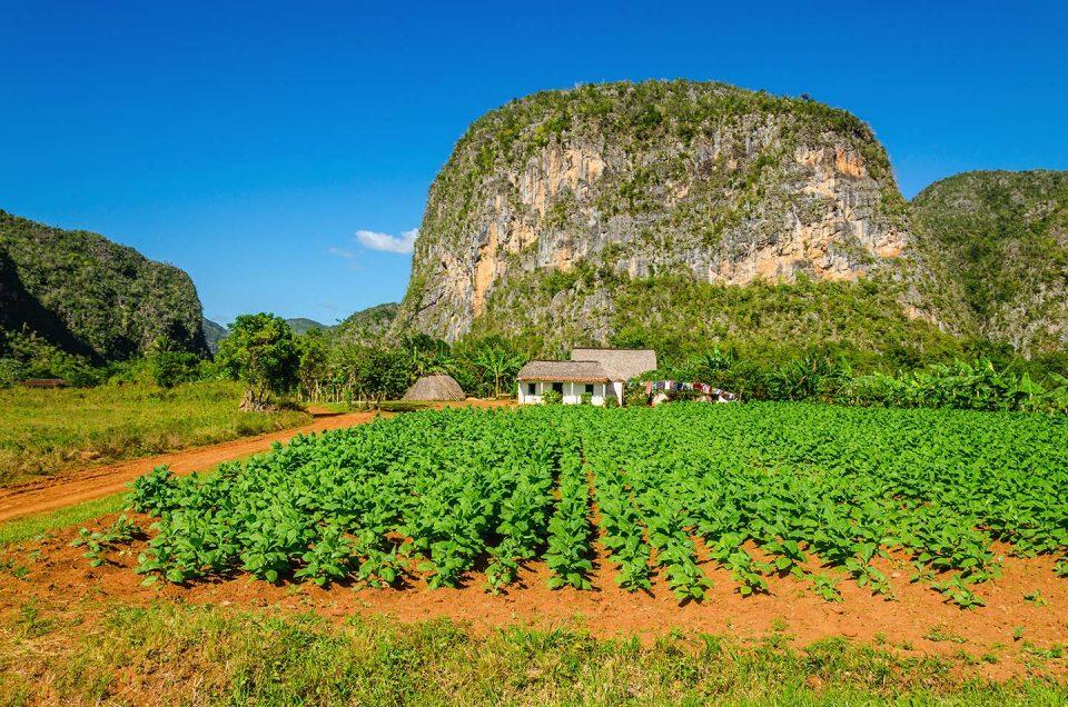 Cosa vedere a Cuba: Valle di Vinales e Pinar del Rio