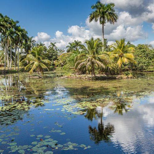 palude vicino allevamento di coccodrilli cuba