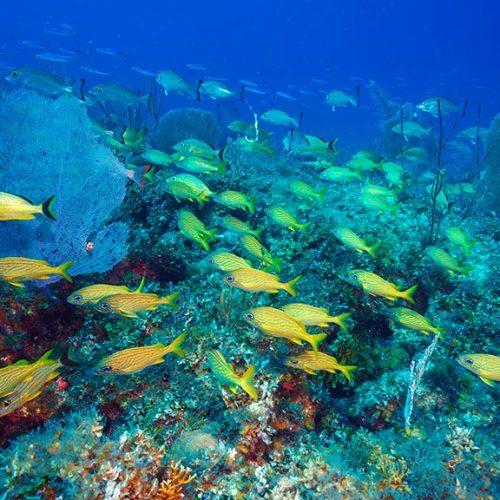 Vista sottomarina Cayo Largo Cuba